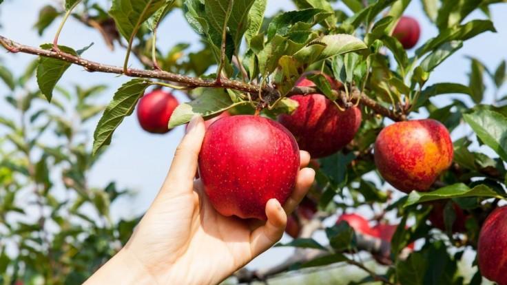 Vedeli ste, že jablká majú svoj medzinárodný deň? Netradične ho oslávili v BILLA