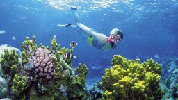 Pre klimatické zmeny prišla austrálska bariéra o viac ako polovicu koralov