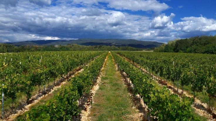 Vďaka Lidlu sa slovenskí vinári presadzujú aj v zahraničí