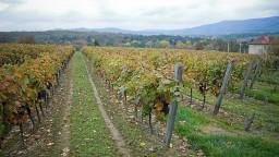 Vinohradníci upozorňujú na nízku podporu, ministerstvo chce pomôcť