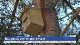 Ochranári chcú spomaliť úbytok vtáctva, inštalujú vtáčie búdky