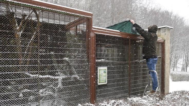 Potvrdili vtáčiu chrípku, objavila sa v Bratislave i v Košiciach