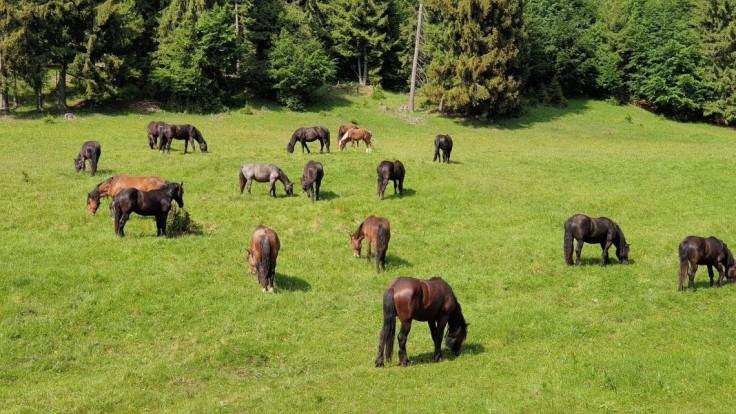 Slovenské národné parky sa dostali do trojice najkrajších v Európe