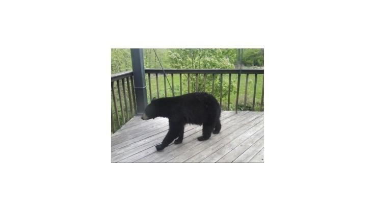 Medveď napadne človeka len vo veľmi výnimočných prípadoch
