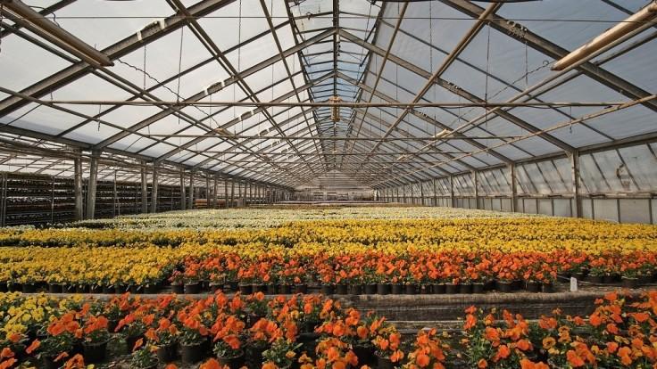 Transparentné solárne články neberú svetlo rastlinám v skleníku
