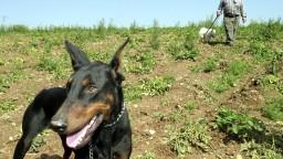 Žena bránila svojho psa pred dobermanom, liečiť sa bude mesiace