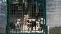 Preč z preplnených útulkov. Koronakríza napomohla adopcii psov