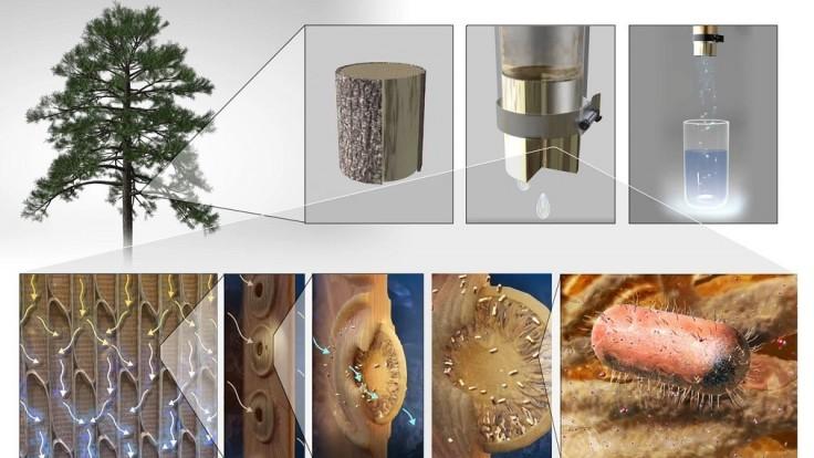 Vedci vyrábajú filtre z konárov stromov na čistenie pitnej vody