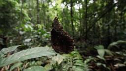 Ako vznikol Amazonský prales? Vedci prišli s novým zistením