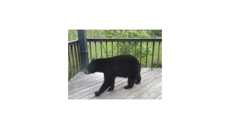 Strieľaním medveďov sa porušujú legislatívne normy