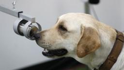Psy už neodhalia iba výbušniny či drogy, identifikujú aj koronavírus