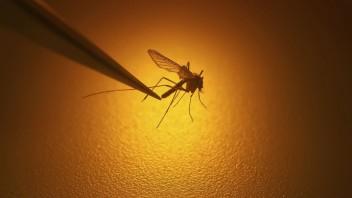 Prelomový pokus s komármi znížil prípady nebezpečnej horúčky až o 77 %