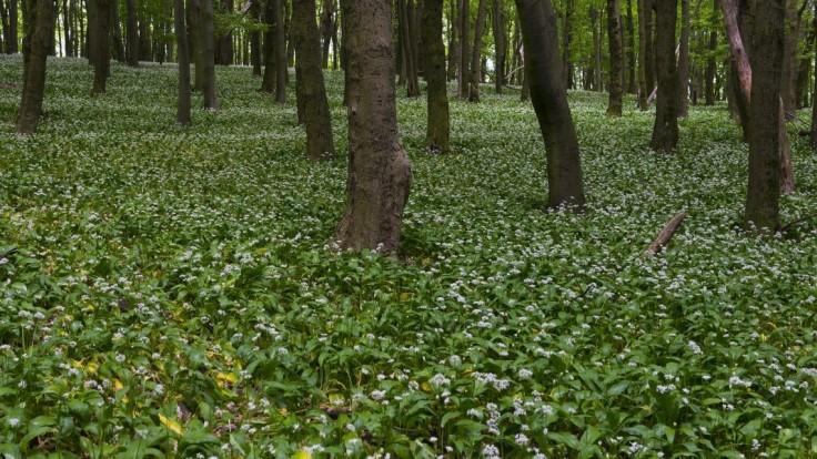 Lesníci nesúhlasia s presunom lesov pod envirorezort. Žiadajú stiahnutie návrhu
