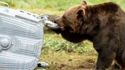 Rezort životného prostredia chce identifikovať medveďa, ktorý spôsobil úmrtie