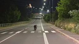 V uliciach Žiaru nad Hronom sa pohyboval medveď. Polícia vyzýva na zvýšenú opatrnosť