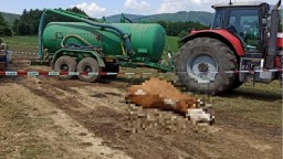 Lúku na Považí pokryli mŕtve zvieratá. Polícia vyšetruje otravu 67 kráv