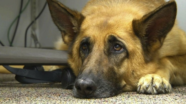 S držaním psov na reťaziach je koniec. Zákon začne platiť budúci rok