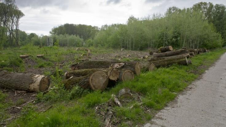 Vlčan vníma znepokojenie okolo ťažby dreva. Chystá sa diskutovať s odborníkmi