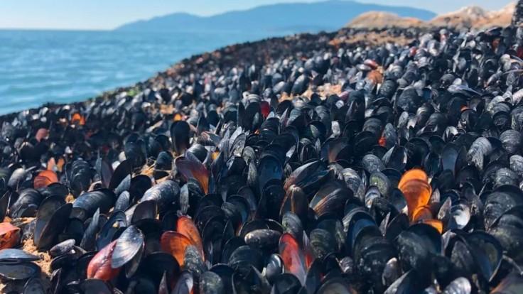Srdcervúci pohľad. Horúčavy zrejme zabili aj miliardu morských živočíchov, tvrdia experti