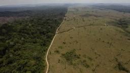 Pľúca zeme trpia. Amazonský prales vylučuje viac oxidu uhličitého, ako dokáže prijať