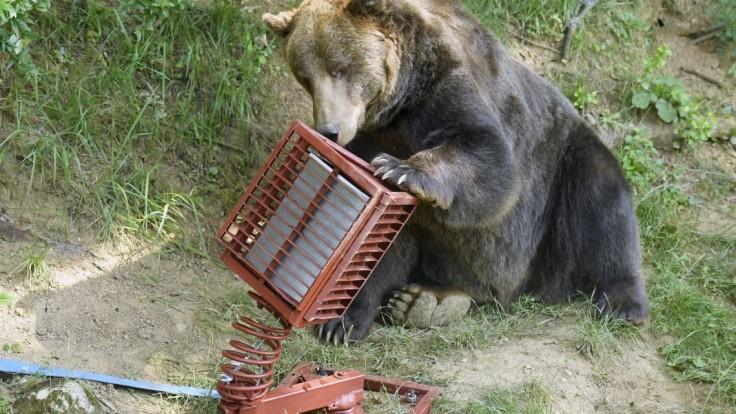 Na medveďoch testovali bariéru, ktorá im má zabrániť vyberať odpad z kontajnerov