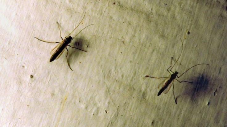 Nádoby s vodou môžu byť liahniskom tisícok komárov, upozorňuje bratislavský magistrát