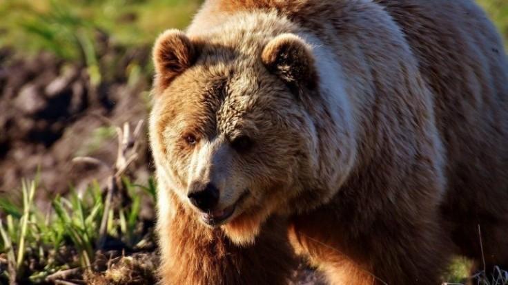 Ako bezpečne držať medvede ďaleko od vašej záhrady