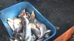 V Hrone uhynuli desiatky rýb, príčiny ekologickej havárie vyšetruje polícia