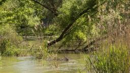 V Dunaji hľadajú stopy po Rimanoch, výskum je priamo pod vodou
