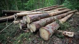 Slovenskí spracovatelia dreva posielajú na Moravu prvý kamión so stavebným materiálom