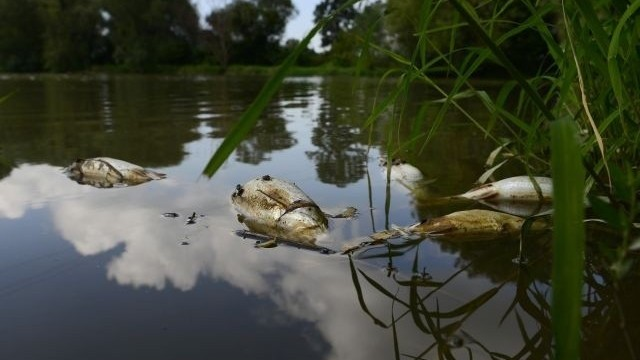Pre znečistenie v Laborci hynú ryby, polícia začala trestné stíhanie