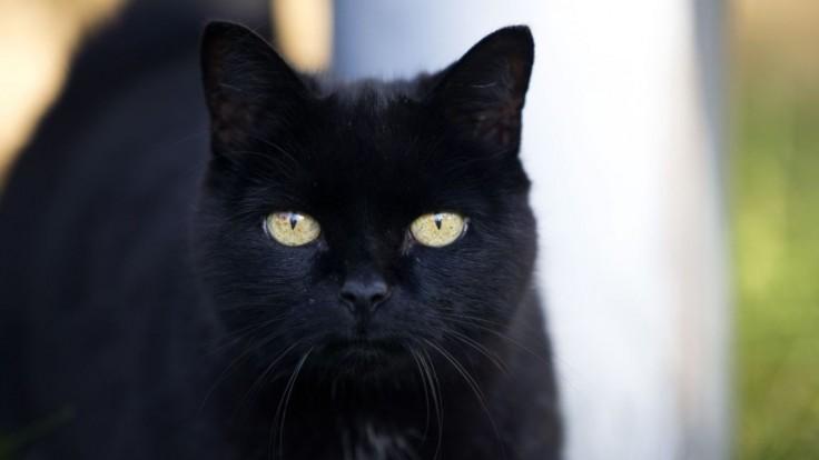 Muž z Británie ubodal deväť mačiek. Odsúdili ho na viac ako päť rokov väzenia