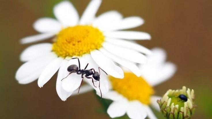 9 prírodných pascí na škodce do ekologickej záhrady