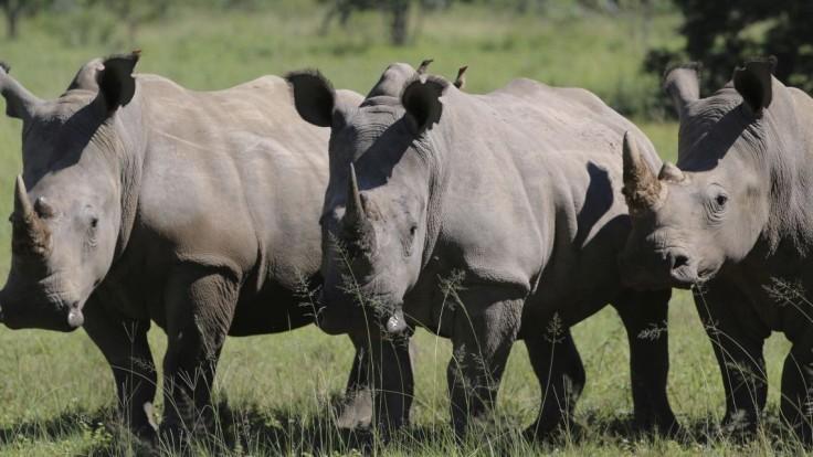 Prípady pytliactva narastajú. V Juhoafrickej republike zabili za pol roka najmenej 249 nosorožcov