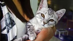 Viete, ako sa cíti vaša mačka? Stačí smartfón s aplikáciou, ktorý prečíta výraz tváre