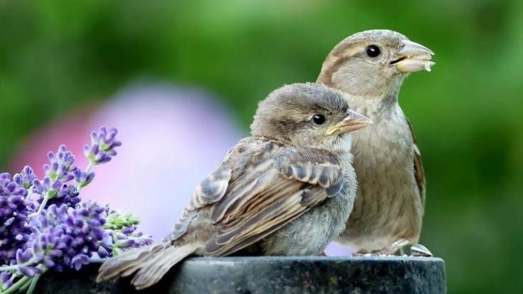 Kŕmenie vtákov cez letné obdobie – viete o tom všetko?