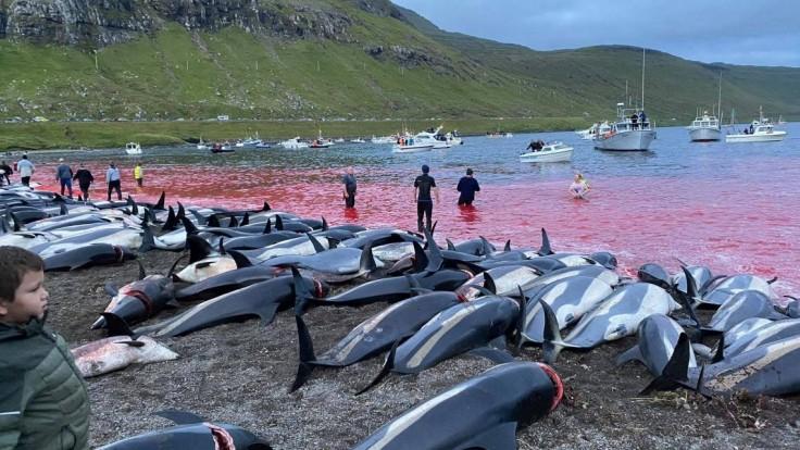 Krutý zvyk na Faerských ostrovoch. Lov delfínov si vyžiadal životy vyše 1400 morských cicavcov