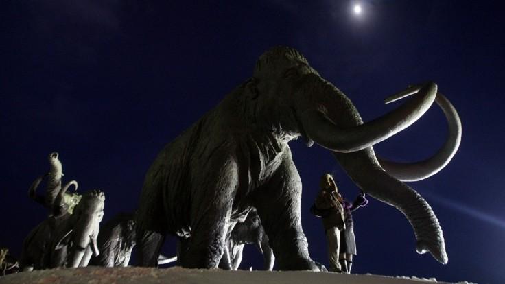 Vedci chcú do prírody vrátiť mamuty. Tvrdia, že by to mohlo pomôcť klimatickej kríze