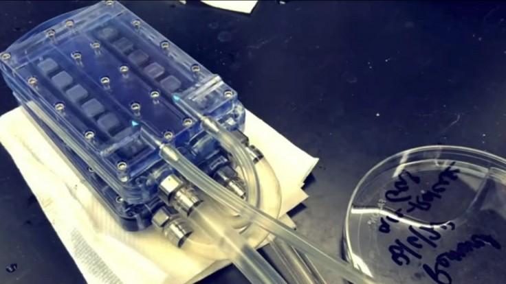Vedci úspešne otestovali prototyp bioumelej obličky