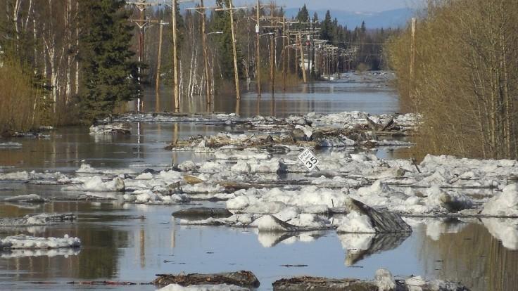 Aljašské úrady varujú pred agresívnymi vydrami, útočia na ľudí