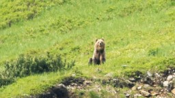 Zásahový tím usmrtil ďalšieho medveďa, potuloval sa v okolí popradského letiska