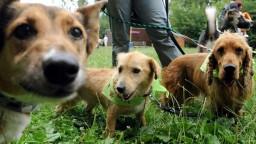 Kruté podmienky i fatálne zdravotné problémy. Sloboda zvierat upozorňuje na množiarne psov