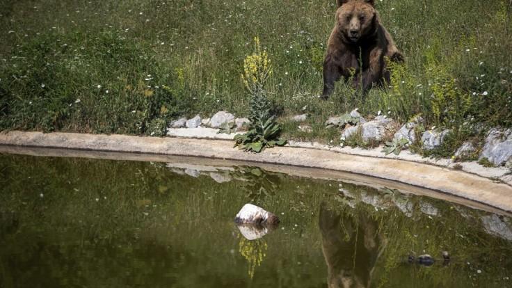 Japonci prišli s inovatívnym riešením, ako sa brániť pred zatúlanými medveďmi