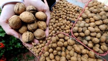 Vlašské orechy poskytujú výživu pre mozog. Chránia aj srdce