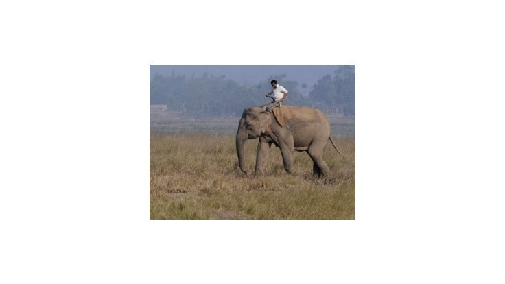 Vlak v Indii zabil päť slonov prechádzajúcich cez koľajnice