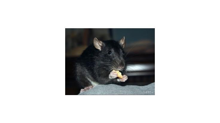 Jed na krysy v poľských vafliach vraj nie je klasifikovaný ako nebezpečný