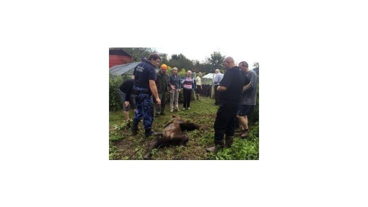 Pri obytnej štvrti v Prešove poľovník zastrelil zatúlaného medveďa
