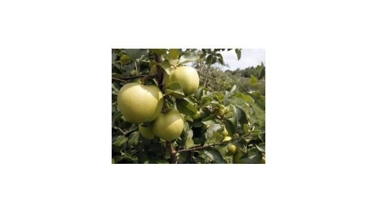 Rakúsky minister vyzýva krajanov, aby jedli viac jabĺk
