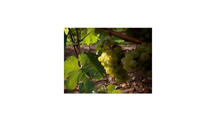 Francúzsko sa stalo najväčším producentom vína na svete