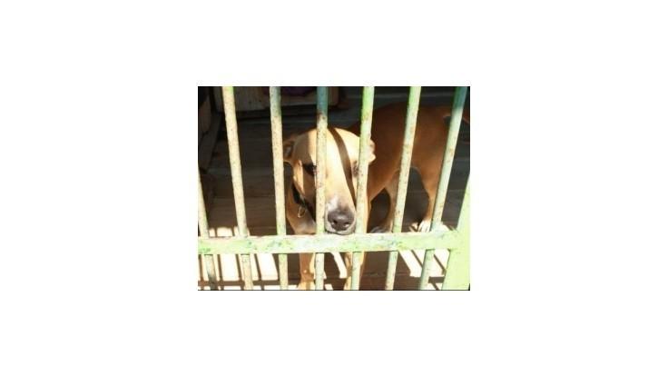 Banskobystričanom, ktorí si z útulku adoptujú psa, mesto odpustí daň na jeden rok